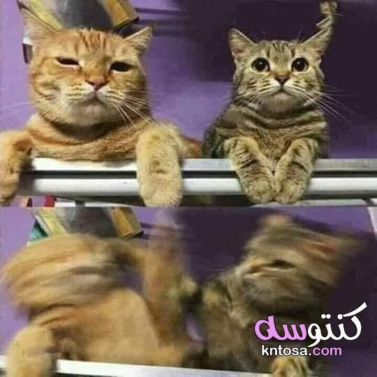 كوميك القطة اللي بتعيط في المايك كوميك القطط قطط مكتوب عليها كلام مضحك Kntosa Com 28 19 157 Funny Baby Memes Cute Cats Funny Babies