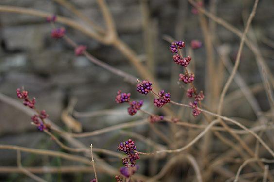 Berries | Flickr - Photo Sharing!