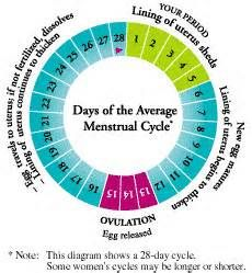 Women menstrual cycle chart heart impulsar co