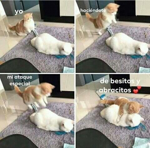 Pin De Jennyfer Quinde En Michis Memes Divertidos Meme Gato Memes Romanticos