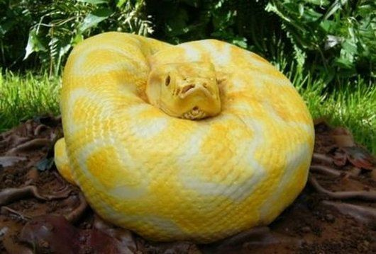 The Creepiest/Coolest Yellow Python Cake EVER