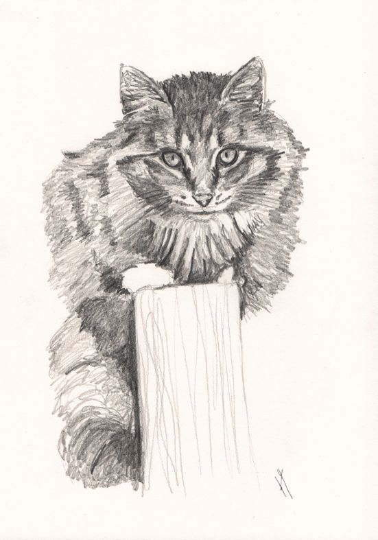 Another one of the new #commission #sketches I now offer of your #animals.  They cost £25 FREE P+P (shipping outside UK quoted on request) Sketches drawn on A4 (one animal). For more than one subject contact me for a quote. Purchasing one of these will also entitle you to £20 off a detailed #pastel #portrait. If you would like to own one of your pets, contact me and email your photos to info@helenyatesart.co.uk
