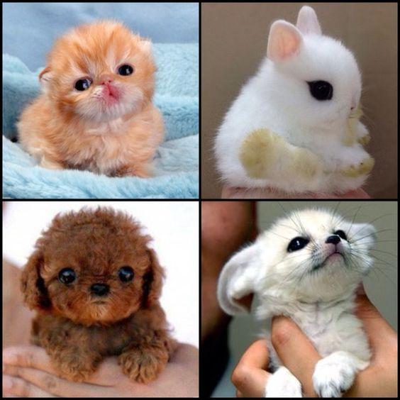 32 Cutest Animals! #Family #Trusper #Tip