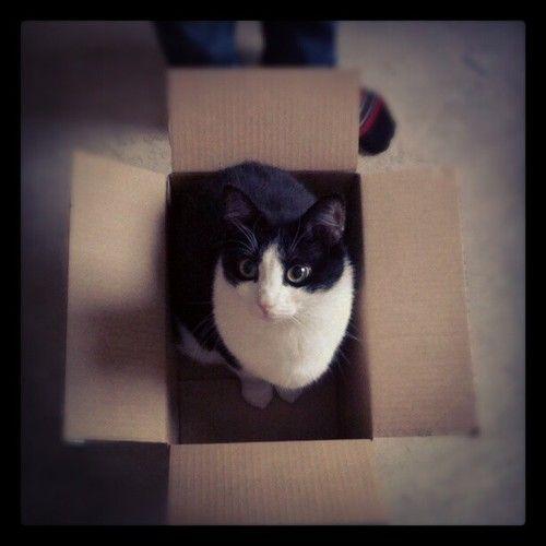 cat named Sigge