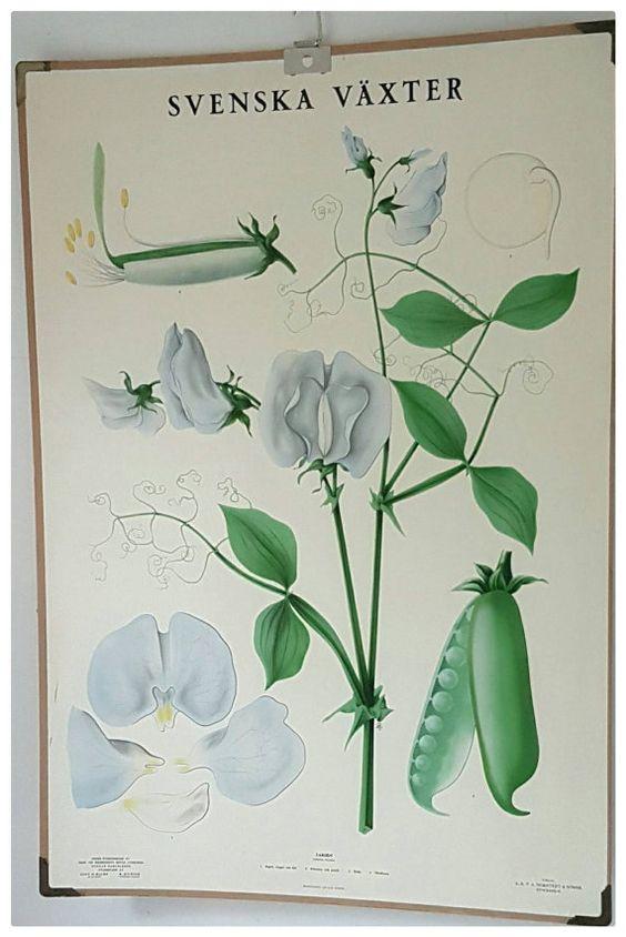 Stunning vintage floral school chart https://www.etsy.com/se-en ...