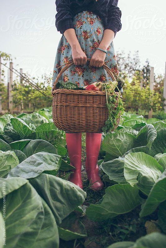 Gardening time - woman holding basket full of fresh vegetables by JovoJVNVC | Stocksy United