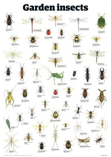 Garden insects Art Print by Guardian Wallchart Easyart.com