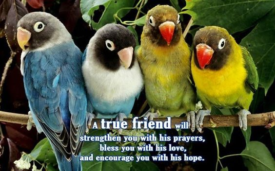 A TRUE FRIEND WILL STRENGTHEN YOU WITH HIS PRAYERS, BLESS YOU WITH HIS LOVE, AND ENCOURAGE YOU WITH HIS HOPE.