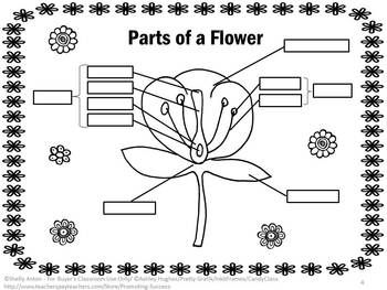 Parts of a Flower Diagram Interactive Science Notebook ...