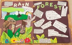 Awesome rainforest lapbook!
