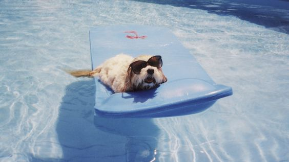 Pets Who Beat The Summer Heat They Don T Call Them The Dog Days Of Summer For Nothing Funny Dog Memes Funny Animals Funny Dogs