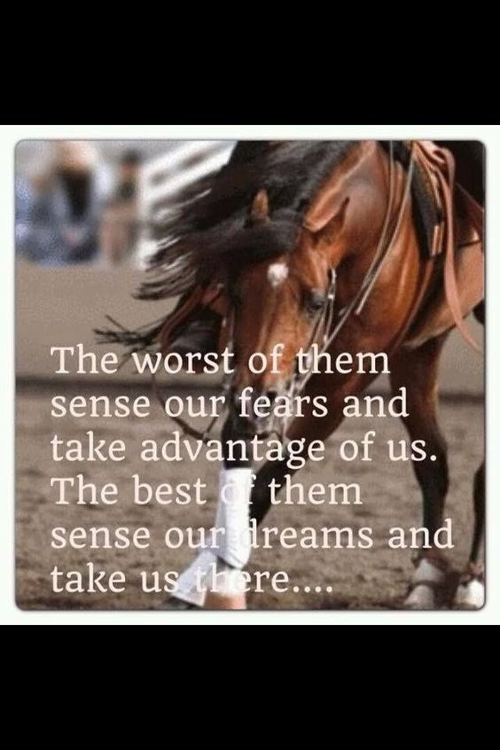 The Worst Of Them Sense Our Fears And Take Advantage Of Us - Horse Quote