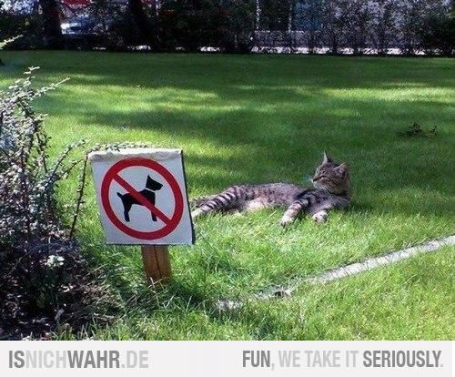 Das Wesen von Katzen in einem Bild erklärt