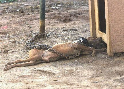 Petition · Change the animal cruelty laws. · Change.org