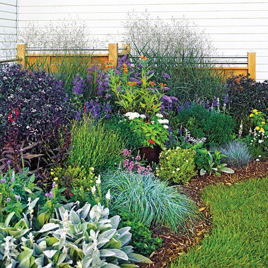 daffodils, switchgrass, blue caryopteris, blue fescue, and purple-leaf Joe Pye weed