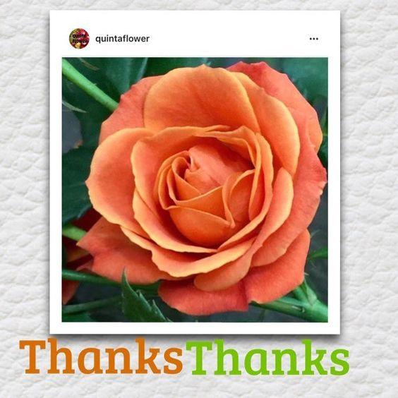 #quintaflower ✨✨ ✨✨✨ #quintaflower . Meu grande agradecimento esta tão conceituada galeria. @quintaflower ✨✨✨✨✨ Especialmente a  moderadora. @cleidesorato  meu  Muito Obrigada  pela seleção! ✨❤️✨❤️✨✨