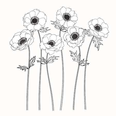 Anemone Flowers Drawing And Sketch With Line Art On White Backgrounds Flower Drawing Flower Art Painting Anemone Flower