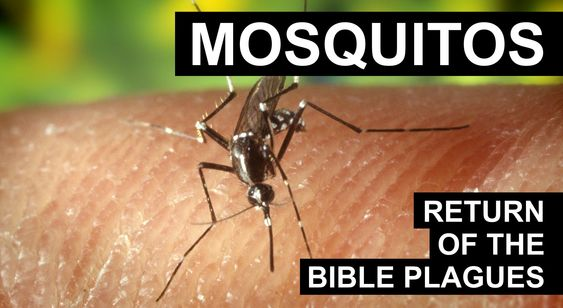 Return of the Plagues - Mosquitos (FULL DOCUMENTARY)