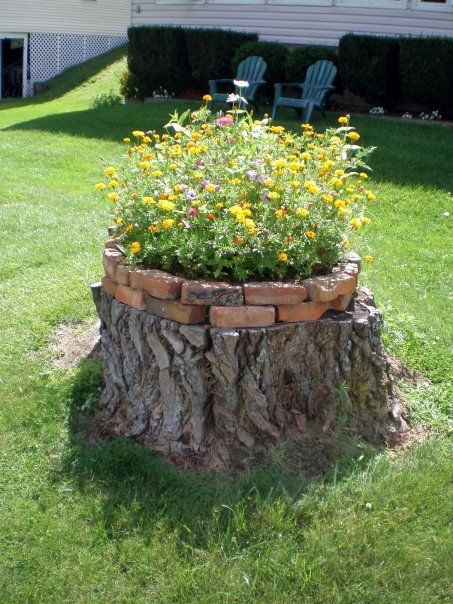 How to put a tree stump in your yard to use for the for Tree trunk uses