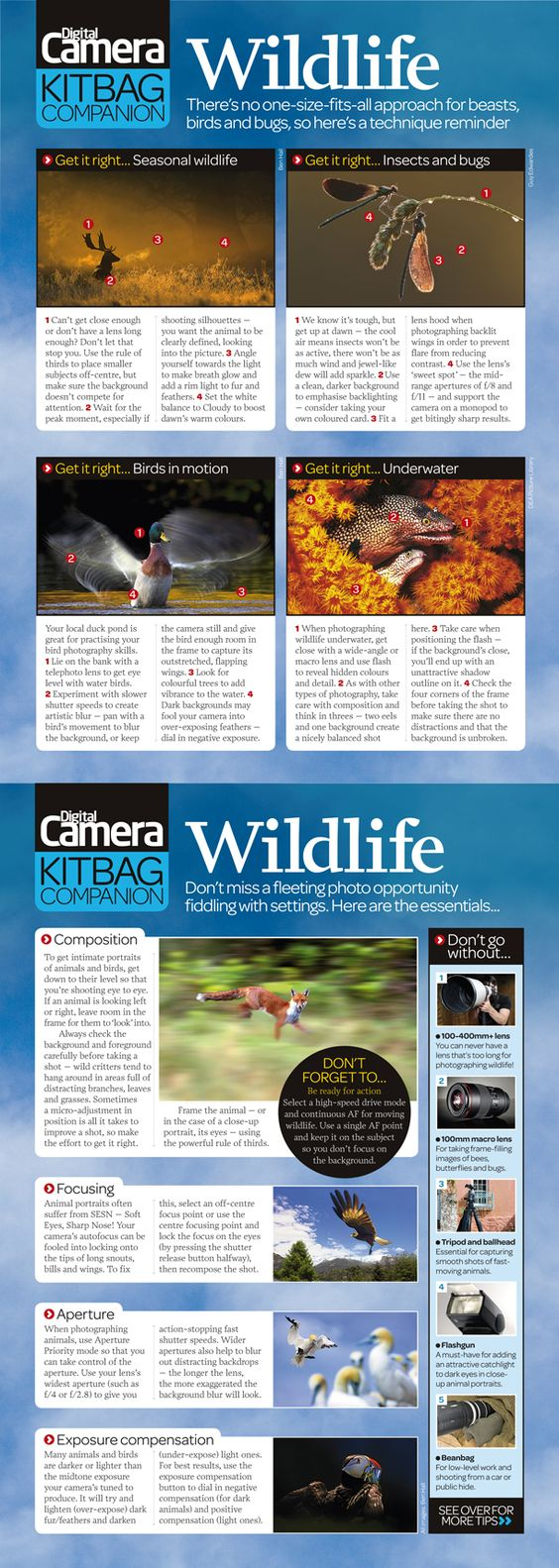 Free wildlife photography cheat sheet: tips on composing, exposing and how to shoot some of the more popular subjects