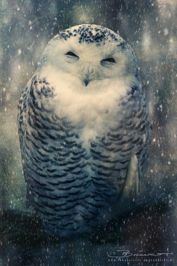 Snowy owl in the snowfall. - by Fokussierte Augenblicke