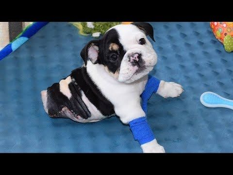 Rescued Puppy Born With 2 Legs Needs Your Help Youtube Cute