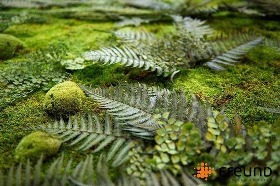 natürlicher Waldboden