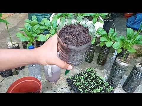 Cara Membuat Pot Sayuran Dari Botol Plastik Bekas Youtube Ide Berkebun Tanaman Bunga Liar