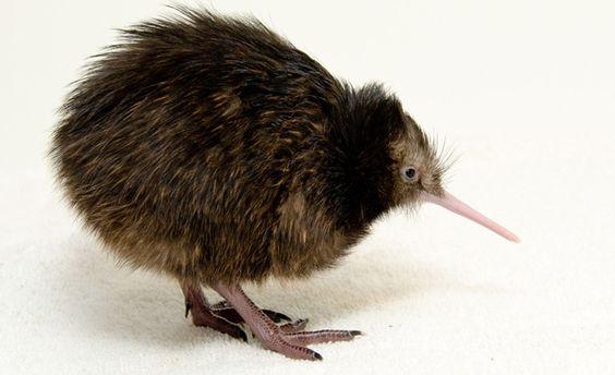 ~ adorable baby Kiwi ~