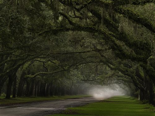 The drive up to Wormsloe Plantation, Savannah Georgia.  My dream driveway