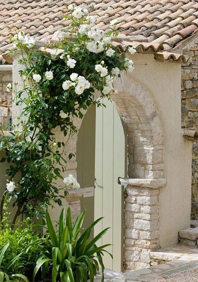 Lovely climbing rose on stone archway.