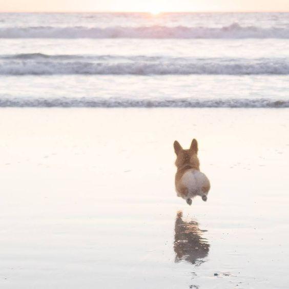 Eeeeeee! Love those little legs and fluffy bubble-butt bouncing towards the sea! #heartwarming