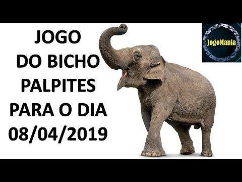 Palpite Para Ganhar No Jogo Do Bicho Para Todo O Brasil 08 04