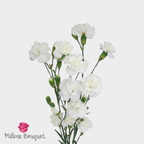 White Mini Carnations Flowers In 2020 Mini Carnations Carnation Flower Wholesale Flowers