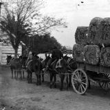 A Load of Cotton Ready for Shipment