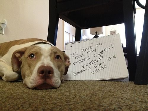 Dog owners write down what their dogs are thinking on this web site...!