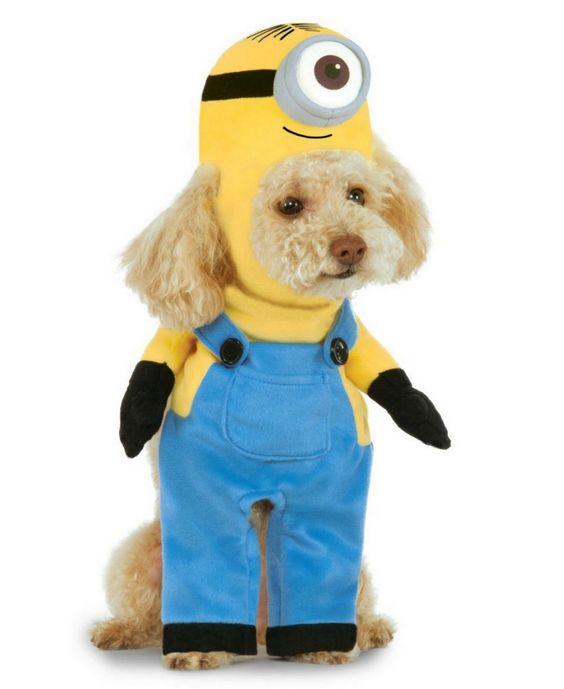 Buyseasons Minion Stuart Arms Pet Co Pet Costume Reviews All Accessories Men Macy S Minion Dog Costume Pet Costumes Best Dog Costumes