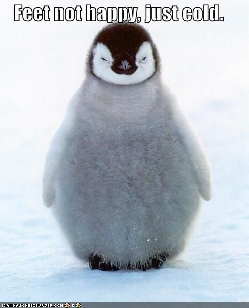 baby penguins are soo cute