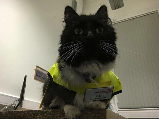 """Felix  tiene el puesto de """" gerente de control de plagas"""" y este puesto es de verdad, no es un juego y ella lo sabe (tickles estación de tren 2)"""
