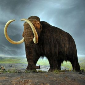 Will wooly mammoths stalk the Earth once more? If de-extinction movement proponent and Whole Earth Catalog founder Stewart Brand has his way, they just might.