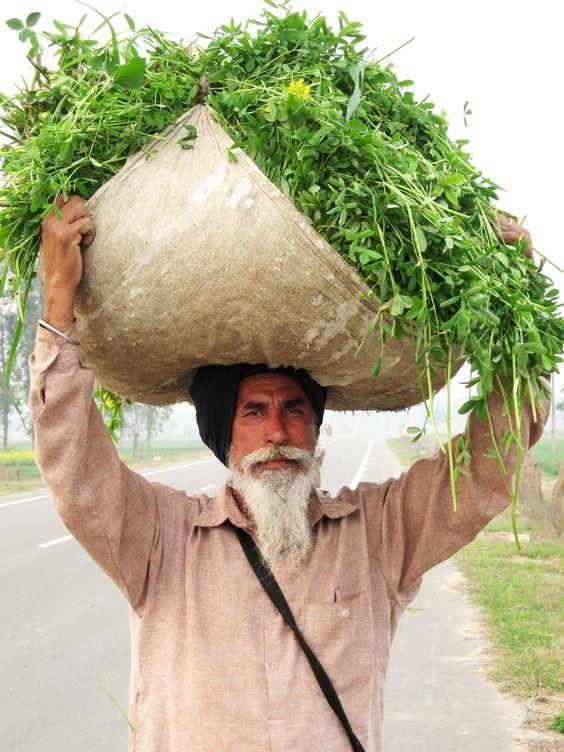 Punjabi_sardar.jpg (JPEG Image, 2304×3072 pixels) - Scaled (21%)