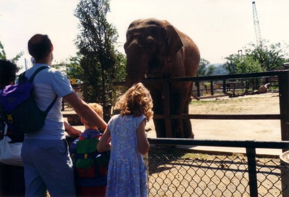 Elephant, June 1989. Chessington Zoo.