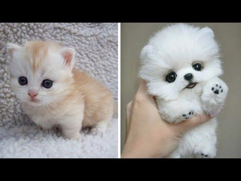 Cute Baby Animals The Cutest Animals Can Only Be Puppies And Kittens Youtube Baby Animal Videos Baby Animals Funny Cute Cats And Dogs