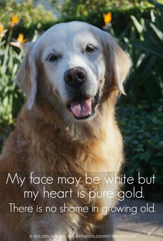 In Honor Of Senior Pet Month Puppy Quotes Dogs Online Dog Quotes