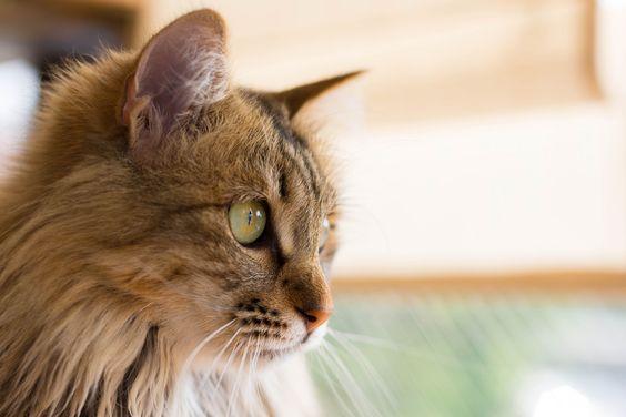https://flic.kr/p/odujb1 | cat