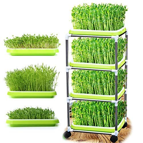 35 99 New Huntfgold Seed Sprouter Trays With 4 Tier Stainless Steel Frame Shelf Stand On Wheels Soilless Bean Sprouting Germination Growing Kits For Home Kitch Seed Sprouter Wheat Grass Seeds Germination