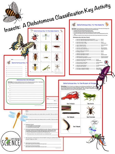 Insects A Dichotomous Classification Key Activity Science Biyoteknoloji