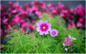 Image result for flower page background hd