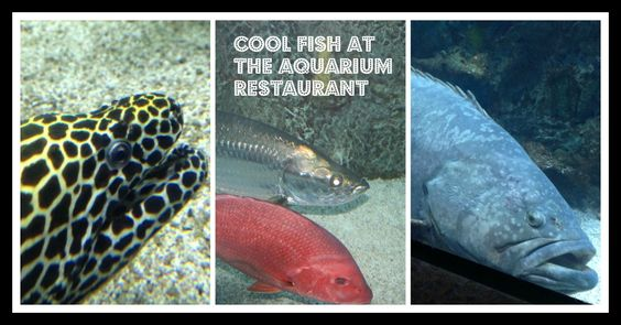 Just some of the cool fish you will see at the Aquarium Restaurant!