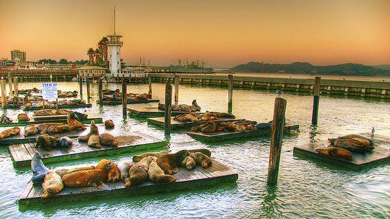 ~Seals at Pier 39, San Francisco, Ca.: Francisco I Ve, Francisco Sunrise, Fran Napa, Flickr Photo, Pier 39, San Francisco And